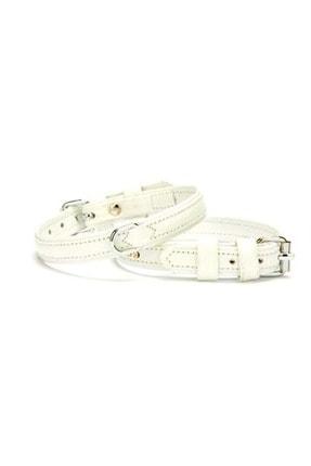 Köpek Beyaz Tasma SFR00707