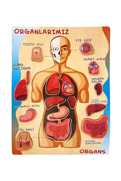 Ahşap Oyuncak Puzzle Organları Öğreniyorum Vücut Montessori Meteryali