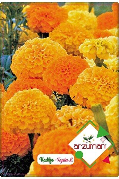 Kadife Çiçeği Tohumu (50 ADET)