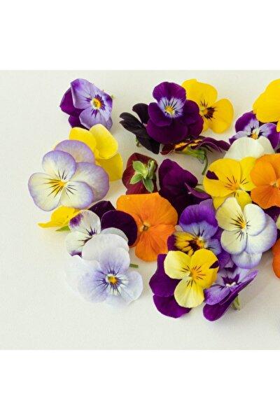 Yenilebilir Menekşe Çiçeği 20 Adetli Paket