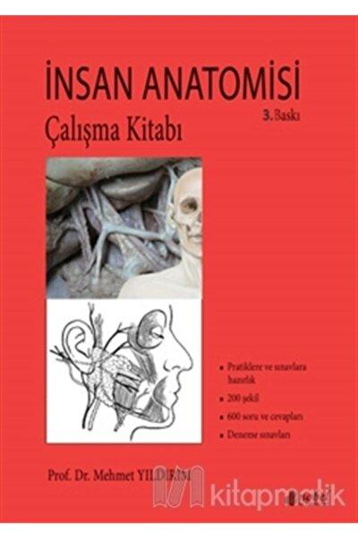 Insan Anatomisi Çalışma Kitabı