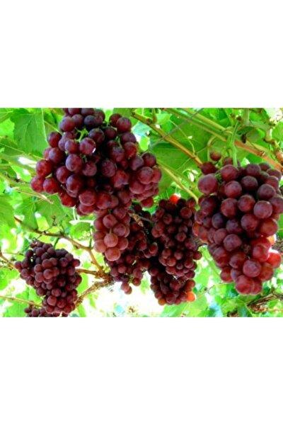 Crimson Seedles Üzüm Fidanı 1 Adet