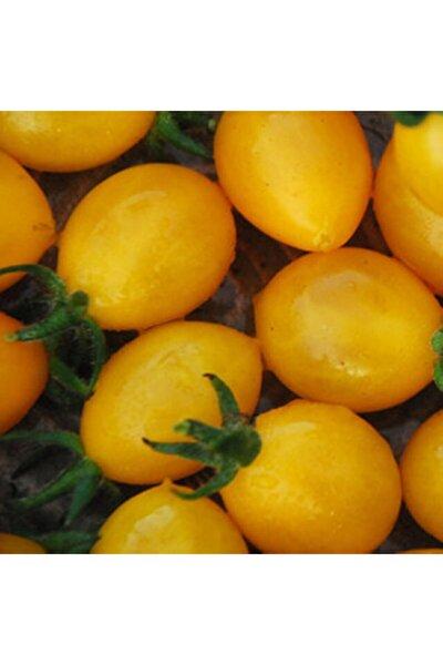 Golden Grape Domates Tohumu