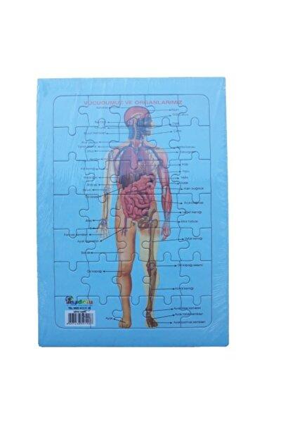 Vücudumuz Ve Organlarımız Eğitici Arkası Konu Anlatımlı Yapboz 25x35 cm