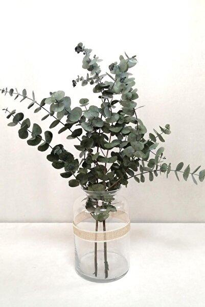 Şoklanmis Küçük Yeşil Okaliptus Demeti