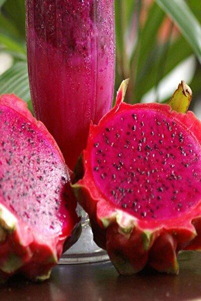 Kırmızı Pitaya Dragon Ejder Meyvesi Çelik Fidanı. Hediyeli(boy 20-30cm)