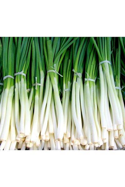 + 20 Adet Yeşil Soğan Tohumu + Sürpriz Hediye Tohum