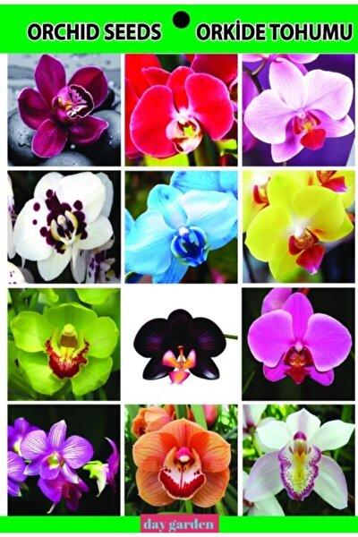 50 Adet Orkide Tohumu + 10 Adet Hediye Hollanda Gülü Tohumu + Kargo Bedava