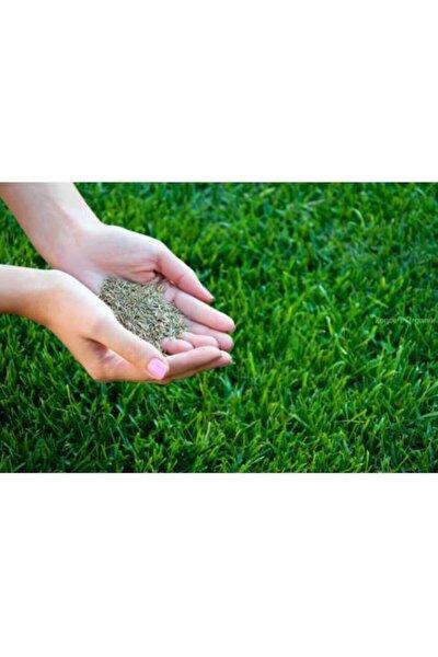 Çim Tohumu 1 Kg. Ulusoy Dinamik 4m Dayanıklı Yoğun Basılan Alanlar Için Ideal Çim Tohumu