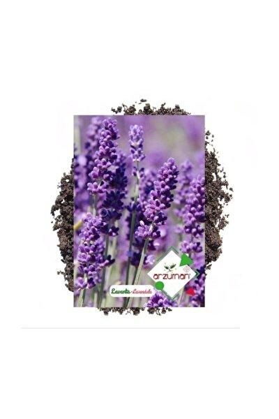 Lavanta Çiçeği Tohumu 100 Adet