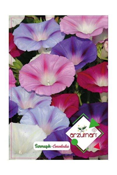 Sarmaşık Çiçeği Tohumu 50 Adet