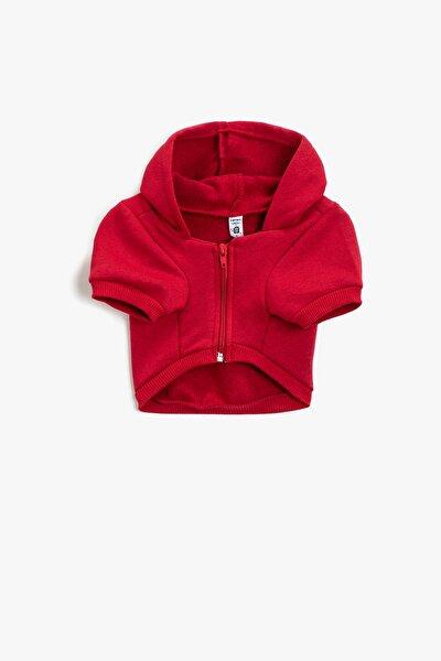 Köpek Kıyafeti Kırmızı Sweatshirt 1KAL68348IK