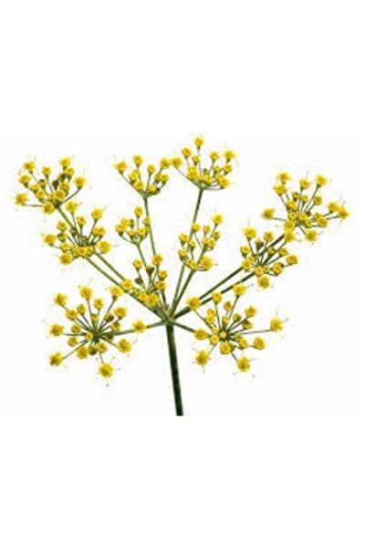 20 Adet Tohum Rezene Çiçeği Tohumu Sarı Rezene Tohumu