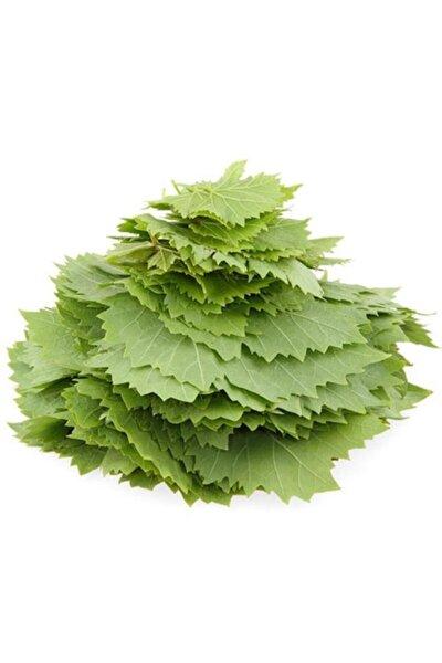 Tüplü Özel Ürün Yapraklık Sarmalık Dolmalık Üzüm (Asma-bağ) Fidanı