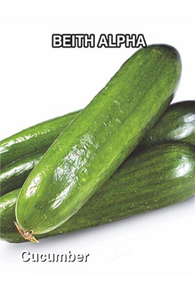 Bol Verimli Hıyar (b.alpha) Salatalık Tohumu Naz 5 Gr