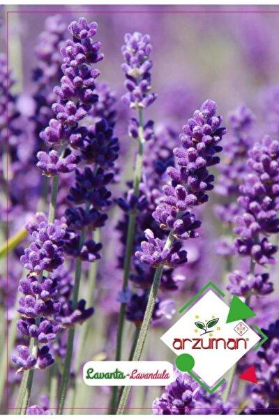 Arzuman Lavanta Çiçeği Tohumu 100 Tohum