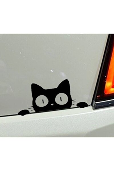 Kedi Oto Araba Sticker Yapıştırma