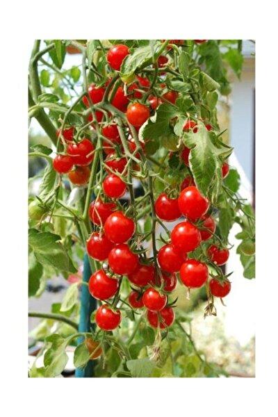 Agrobazar Delıcıous Salkım Cherry Domates Ortalama 25+ Tohum