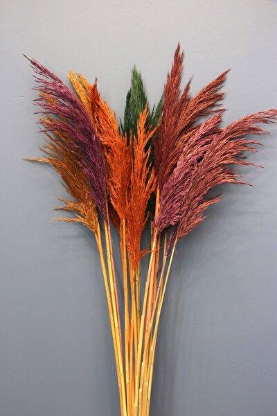 Şoklanmış 15li Pampas Otu Karışık Renk 100 Cm