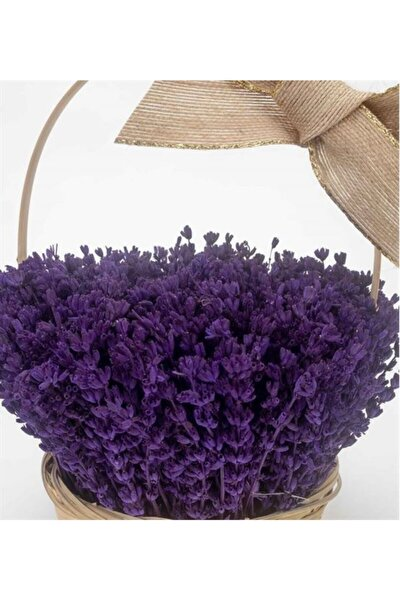 10 Adet Bodur Ingiliz Lavantası Kokulu Çiçek Tohumu