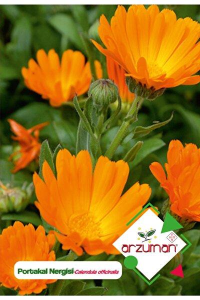 Portakal Nergisi - Aynı Sefa (calendula Officinalis) Çiçek Tohumu 30 Adet