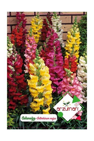 Aslanağzı Çiçeği Tohumu 100 Adet