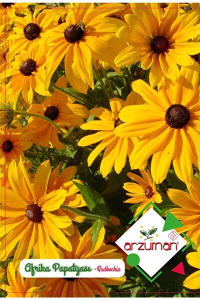 Afrika Papatyası Çiçek Tohumu (100 Adet)