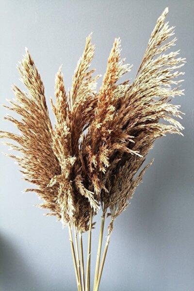 Gerçek Kuru Çiçek Natural Dökülmeyen Şoklanmış Pampas 7 Adet 100 Cm