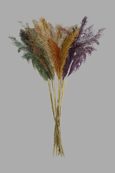 Pampas - Kuru Çiçek 15 Adet 100 Cm Karışık Renkli
