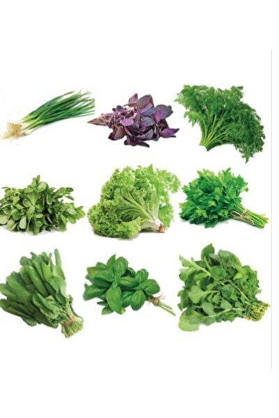 1000 Adet Muhteşem Yeşillik Tohumu Paketi-10 Farklı Çeşit