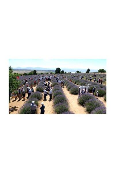 Lavanta Kokulu Köy Kuyucak Yeni Hasat Lavanta Kurusu 500 gr