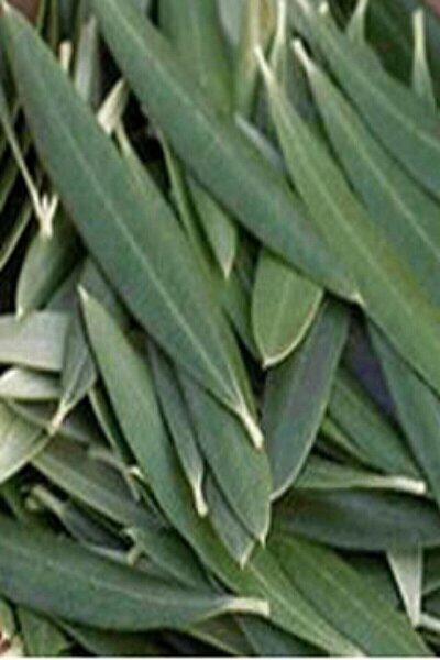 Zeytin Ağacı Yaprağı - 1.kalite Taptaze 1 Kg