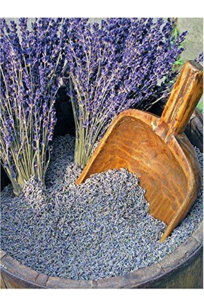 Yoğun Kokulu Yeni Mahsül Doğal Lavanta Çiçeği Kurusu 1000 Gr 1 Kğ