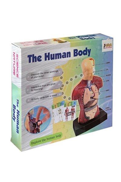 İnsan Vücudunu Keşfediyorum Eğitici Oyun Seti