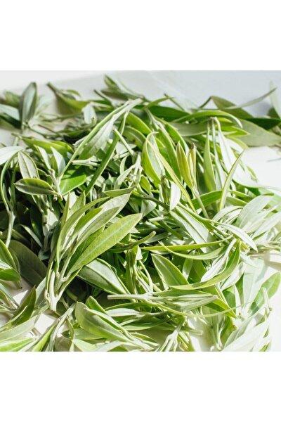 Zeytin Yaprağı Çayı 250 Gr 1. Sınıf