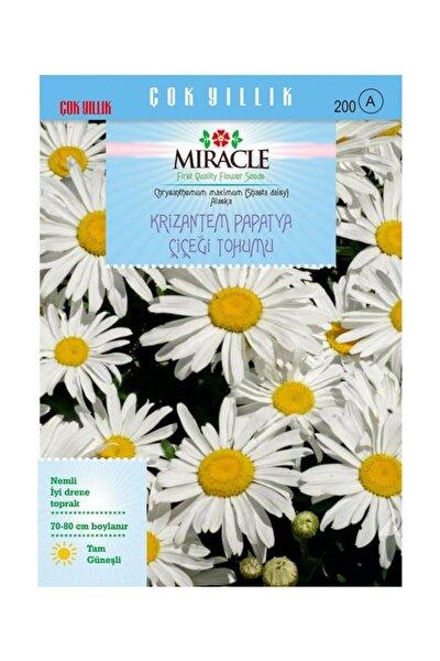 Krizantem Papatya Çiçeği Tohumu (300 Tohum)