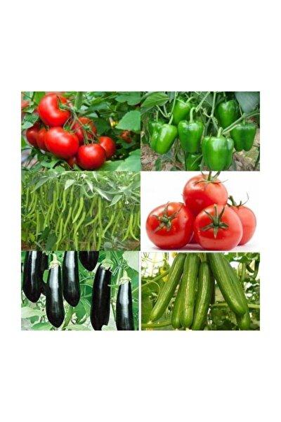 Tam 500 Adet Sertifikalı Domates -salkım Domates-biber-salatalık-patlıcan-dolma Biber Tohumu + Gübre