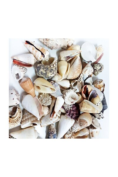 Mixed Shells Büyük Kiloluk Deniz Kabuğu (1 KG)