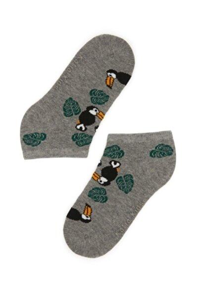 Papağan Desenli Çocuk Patik Çorap