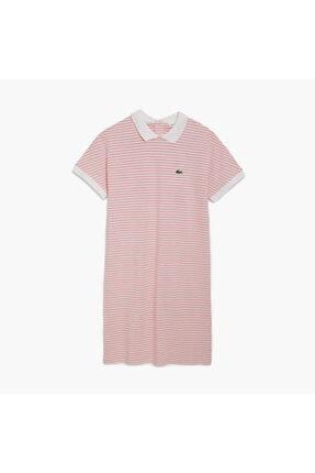 Lacoste Kadın Pembe Bebe Yaka Çizgili Kısa Kollu Elbise